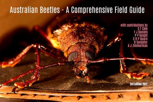 australian beetle guide