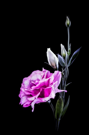 commended pink flower