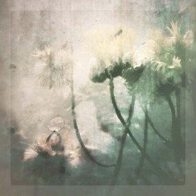 commended urbanflowers2