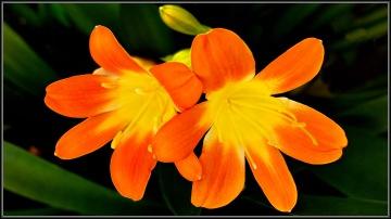 floral pair