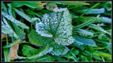 frostygrass
