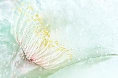 highly commended gumtree flower