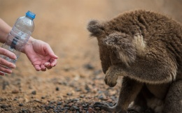 iconic australia_overwhelmed by the generosity of strangers
