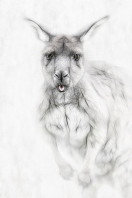 iconicaustralia_kangaroo