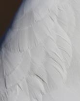 set_feathers