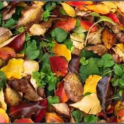 P2280019a MtMacedon colourful autumn leaves Sml